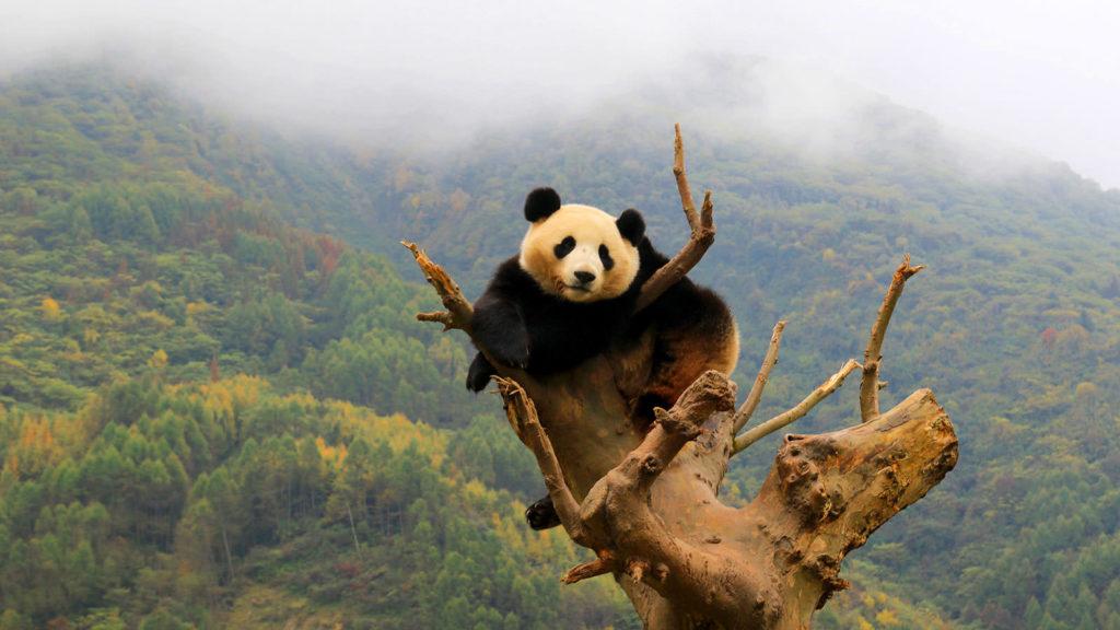 wolong-panda-center-03